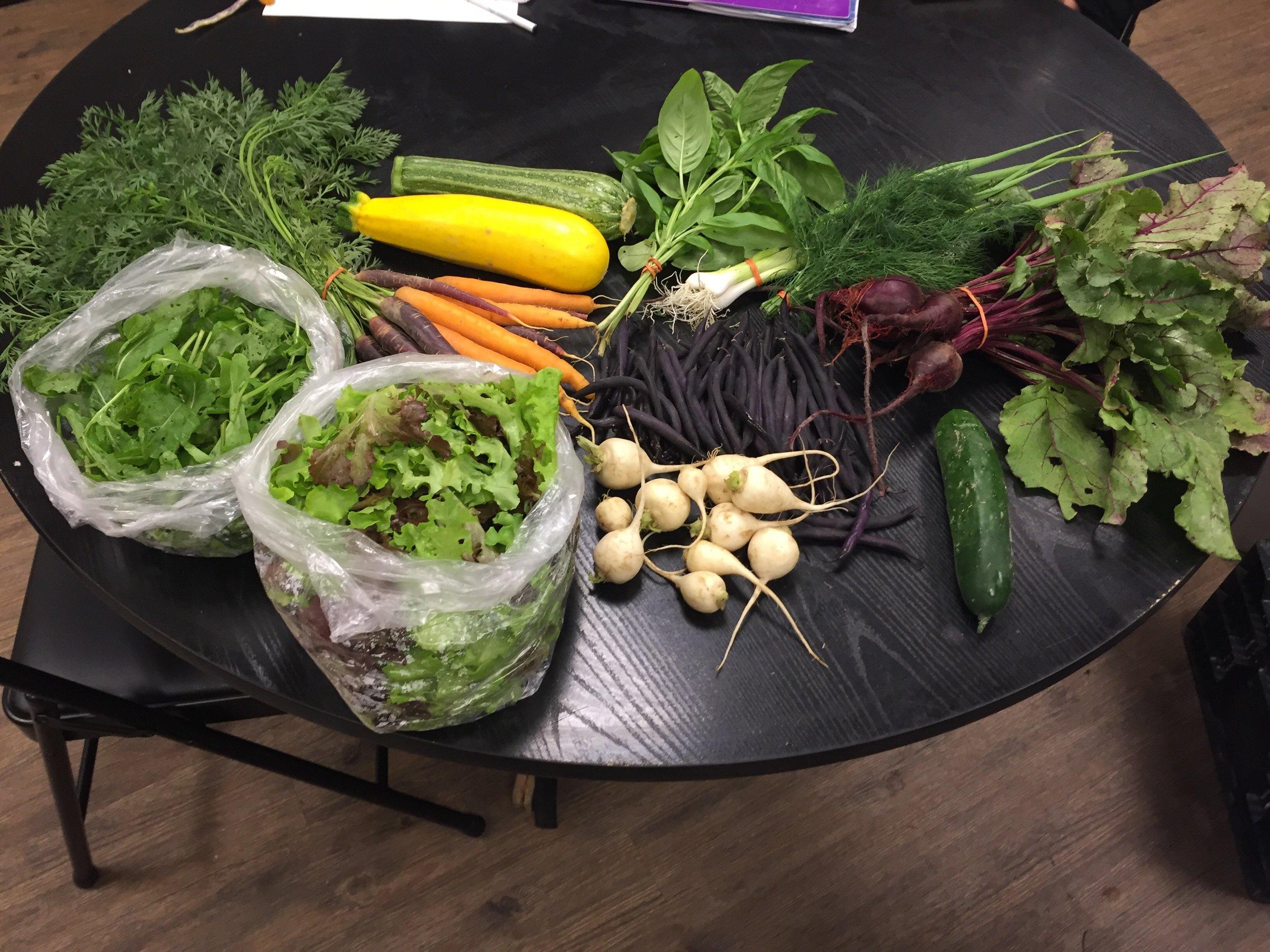 Early Season Share - Purple beans, beets, green onions, basil, dill, rainbow carrots, arugula, leaf lettuce mix, cucumber, salad turnip and zucchini