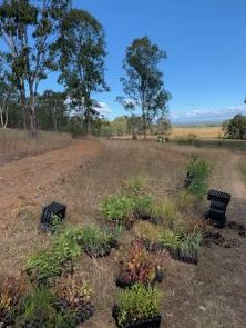 Some of the 1300 new trees planted in the Biobank site. (Photo: The Good Oil)
