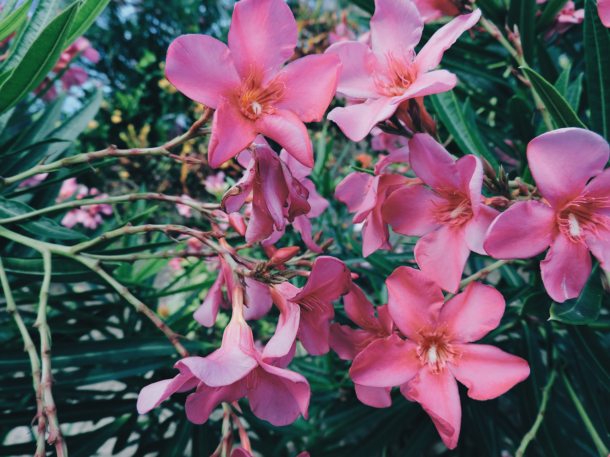 pinkflowerscancuntropical