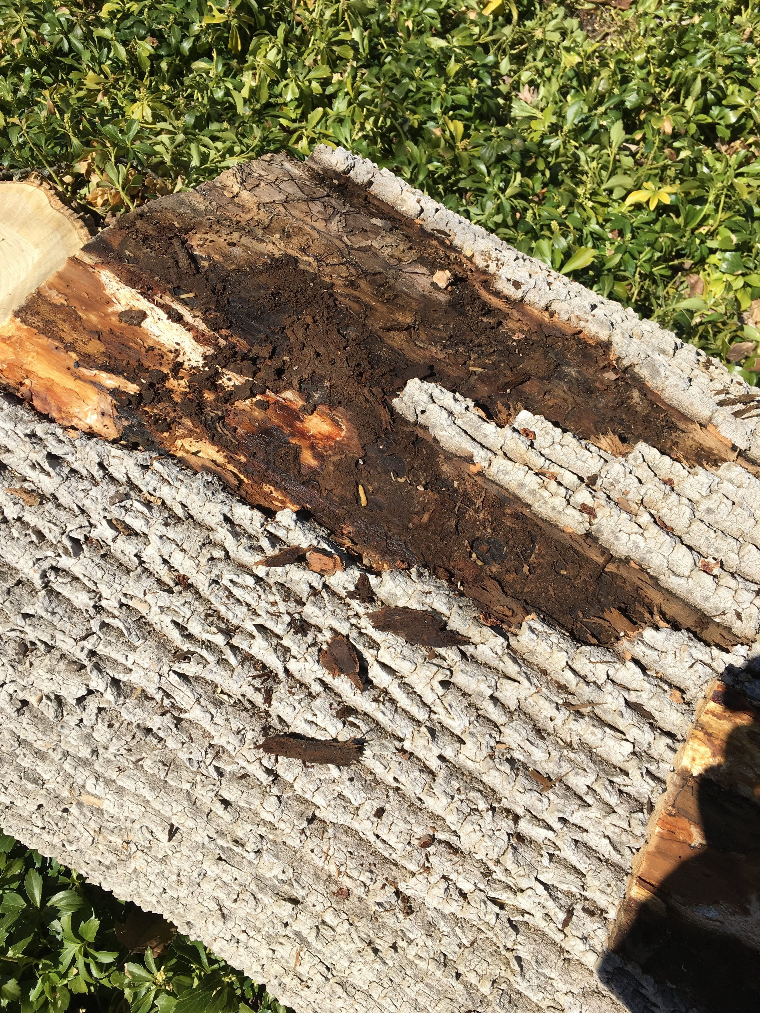 indianapolis woodworking-woodworker-live edge.jpg
