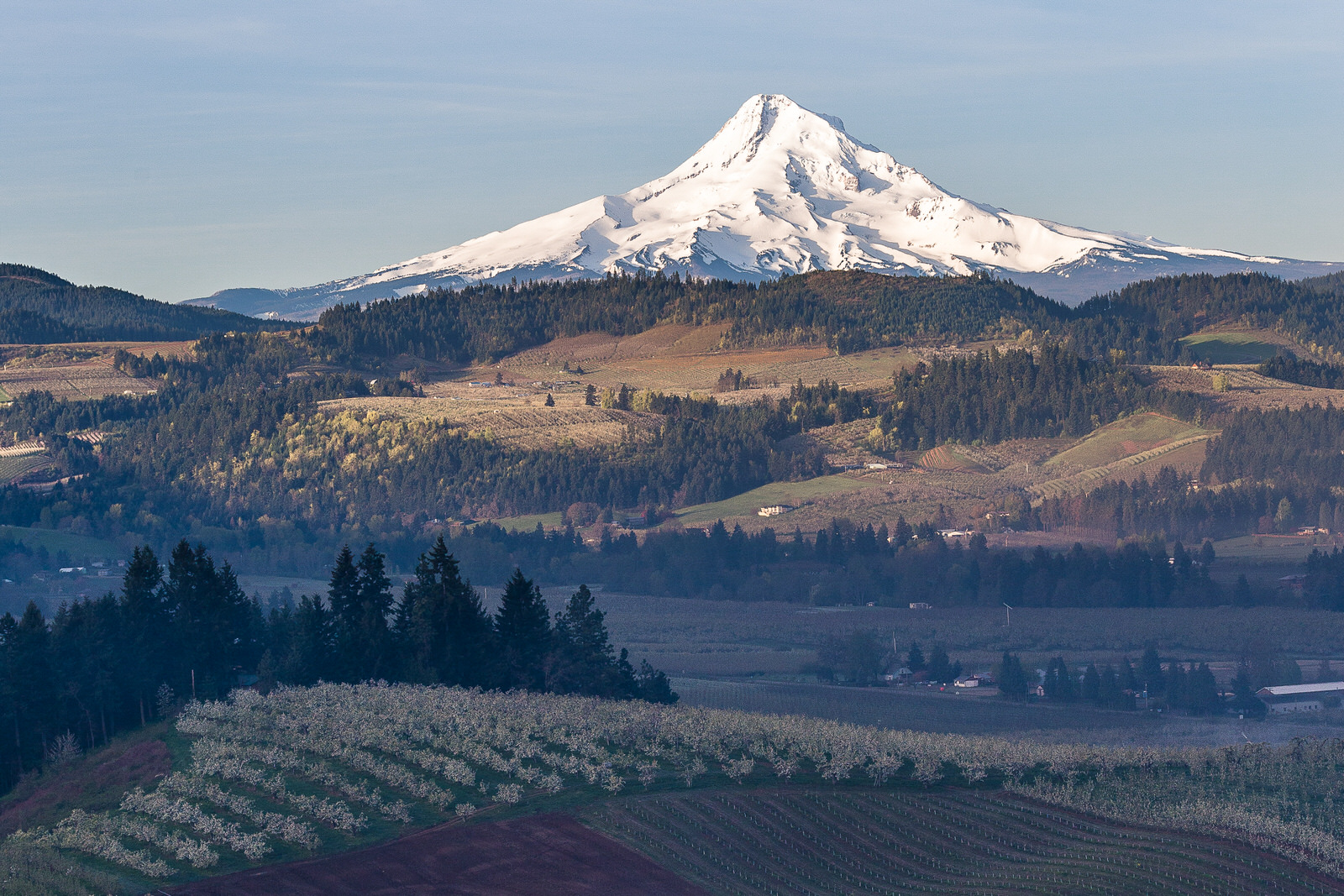Mt. Hood from Panorama Point