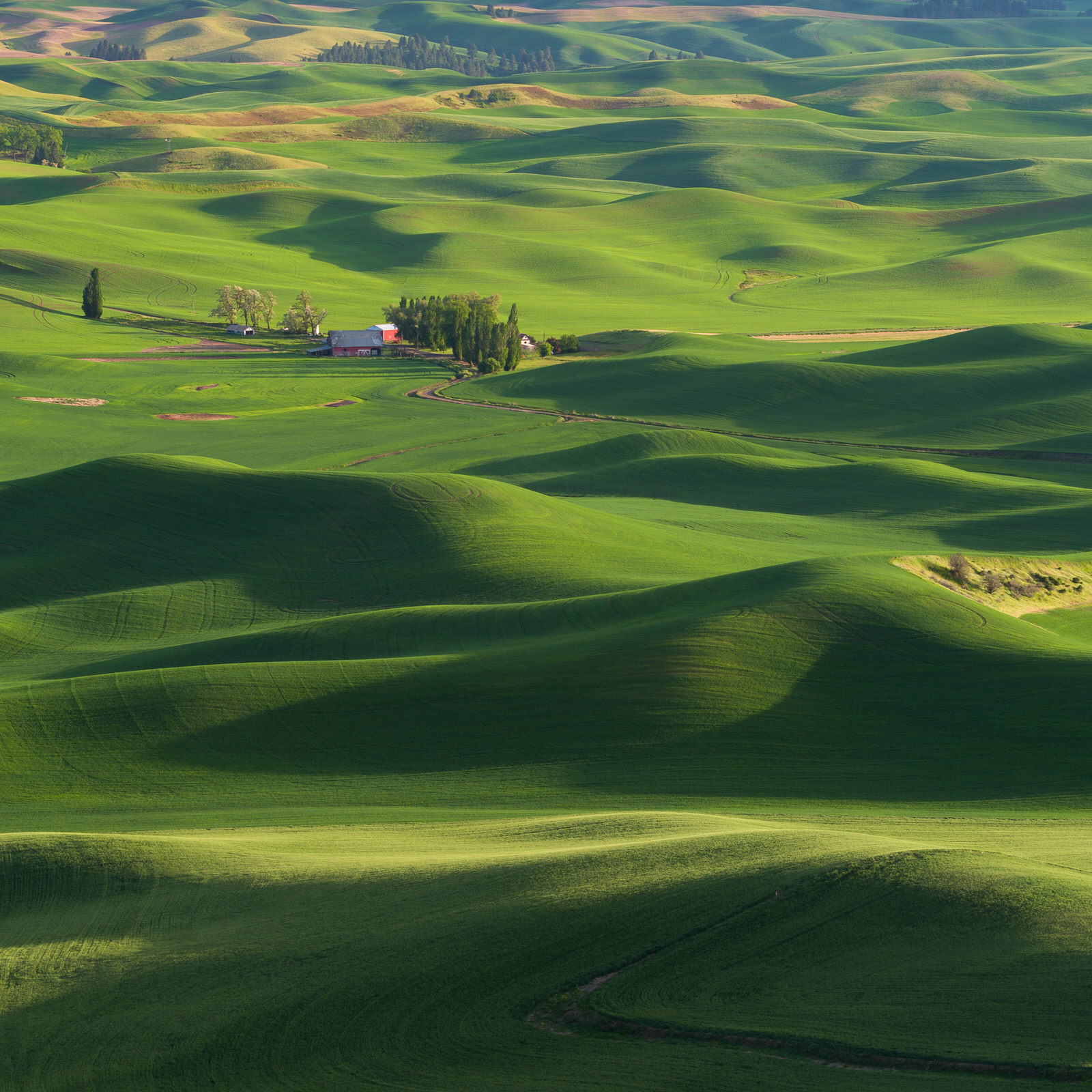 Rolling green hills of the Palouse in spring
