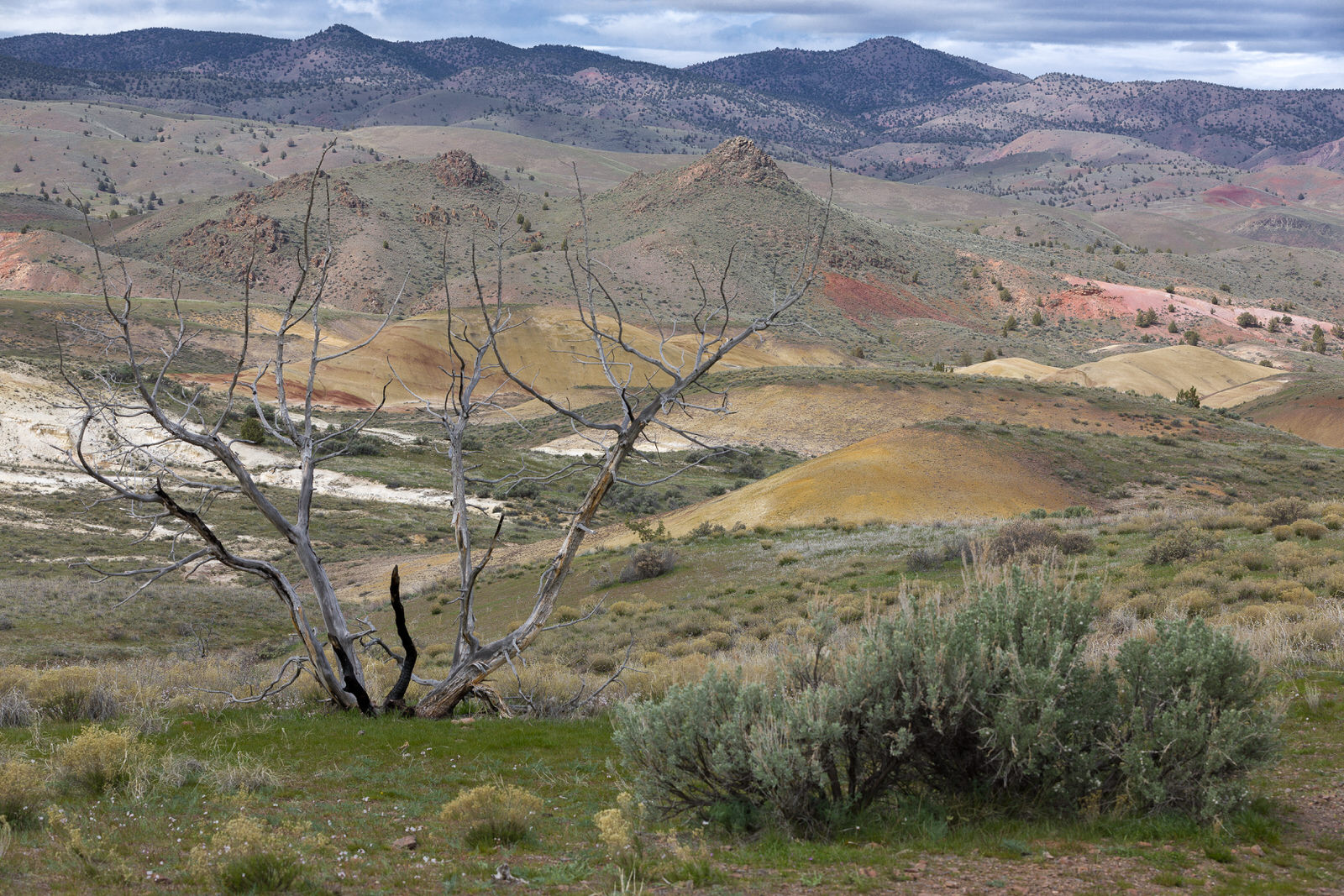 A view to the West from the Painted Hills