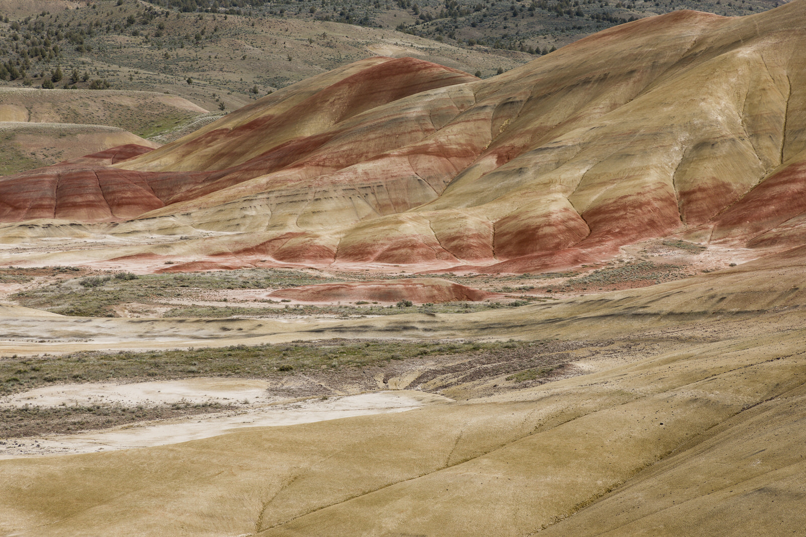Gold and Red Soil in the Painted Hills