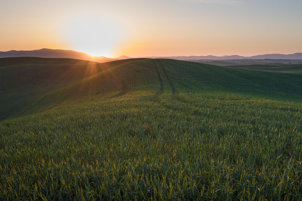 Sunrise panorama over the fields of the Palouse