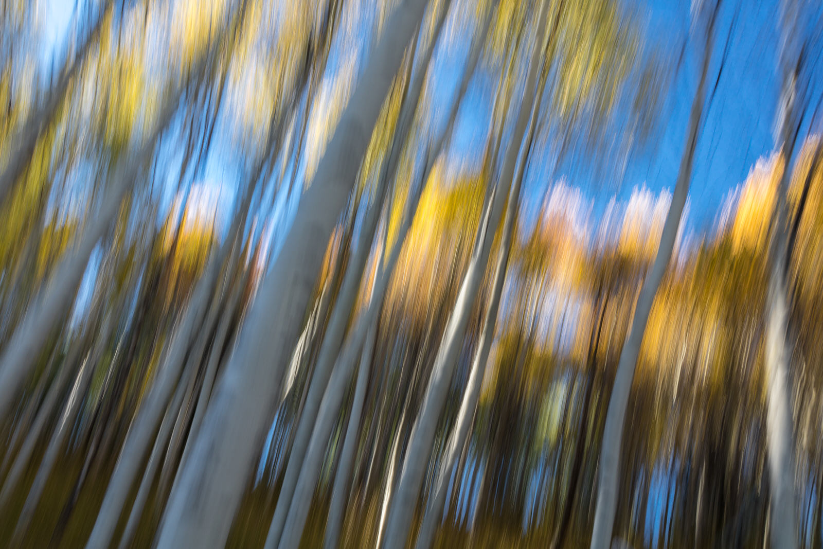 Motion blur in the Aspen trees near Stanley, Idaho