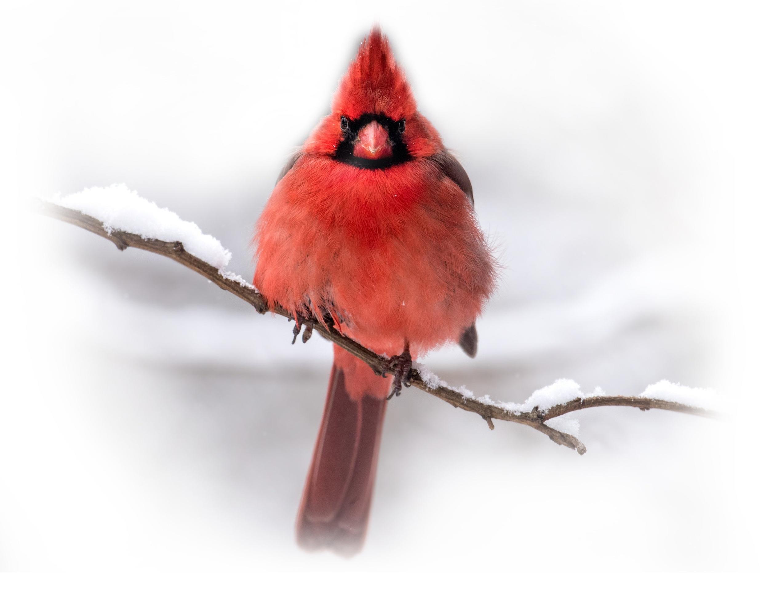 Homepage-Cardinal.jpg