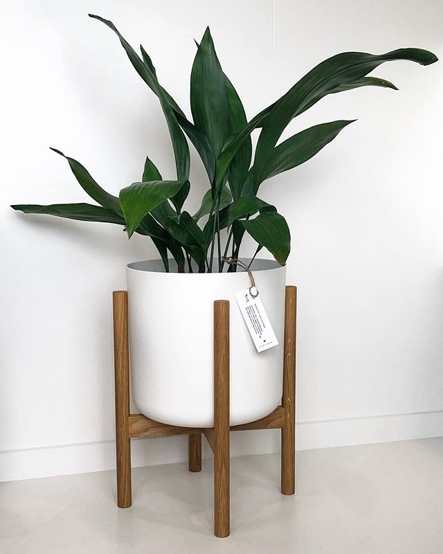 Showing off this gorgeous plant from @plantlove.nz  in our 0.280 Plant stand. 💚
