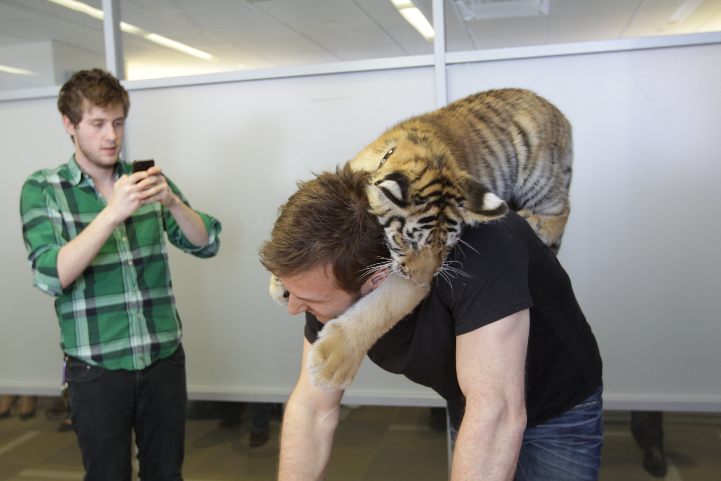 Our friends at Animal Planet invited us to come meet a baby tiger. I photographed the meeting for a post.