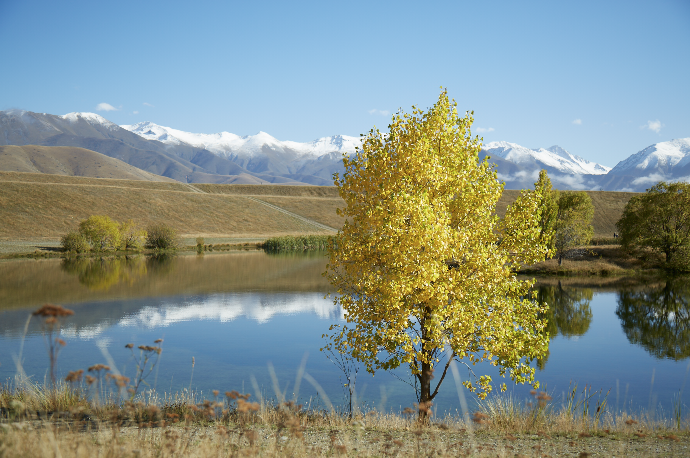 Autumn scene between High Country Cabin and Twizel