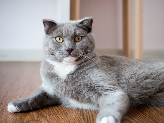 Here is a picture of one of our cats, Soju. We do not test our products on Soju and other animals.