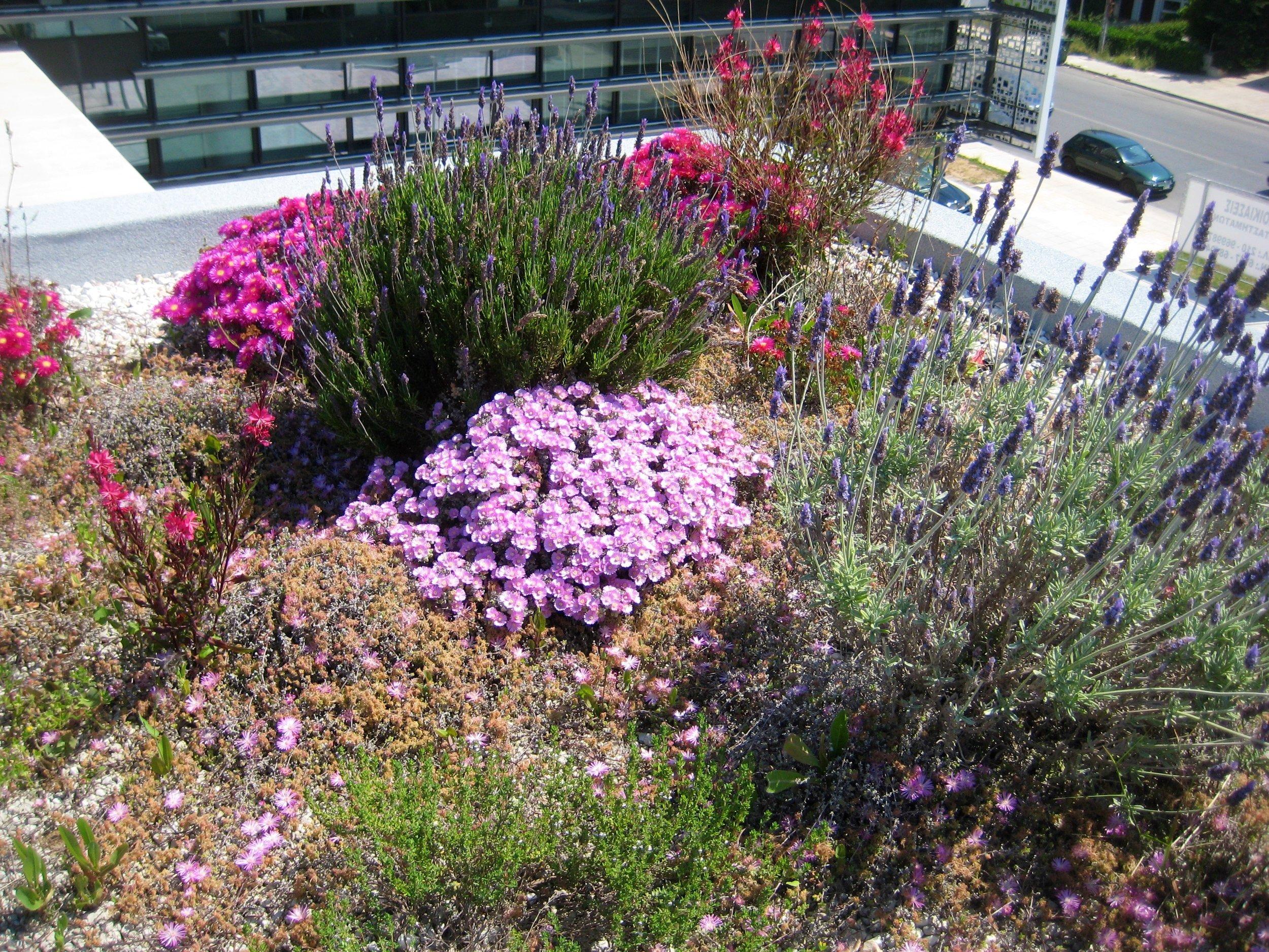 vivacity office wild flowers.jpg