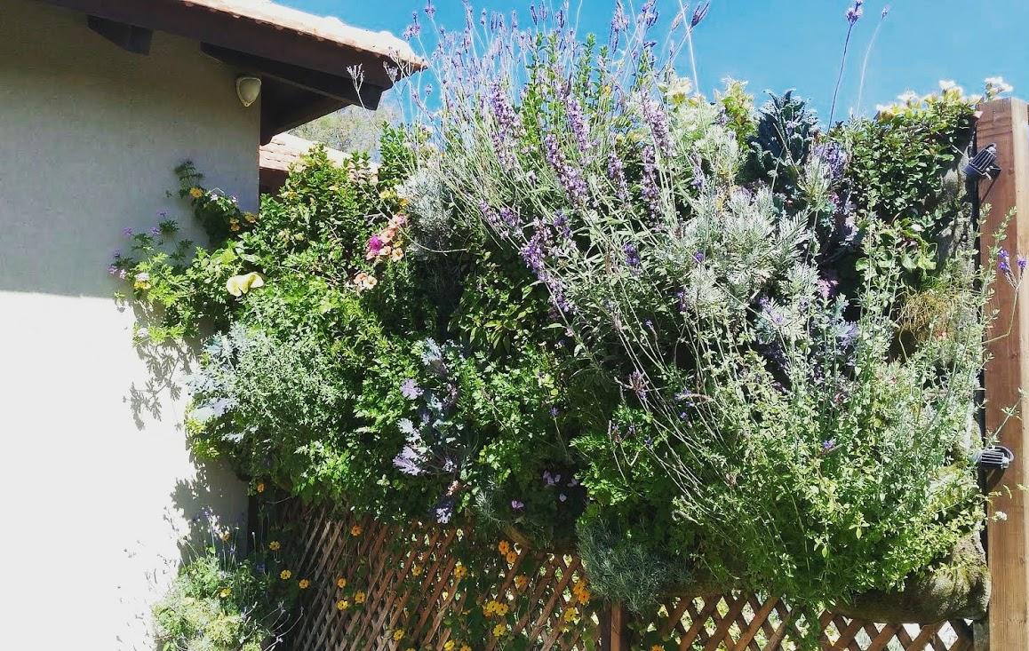 sall garden vivacity 4.jpg