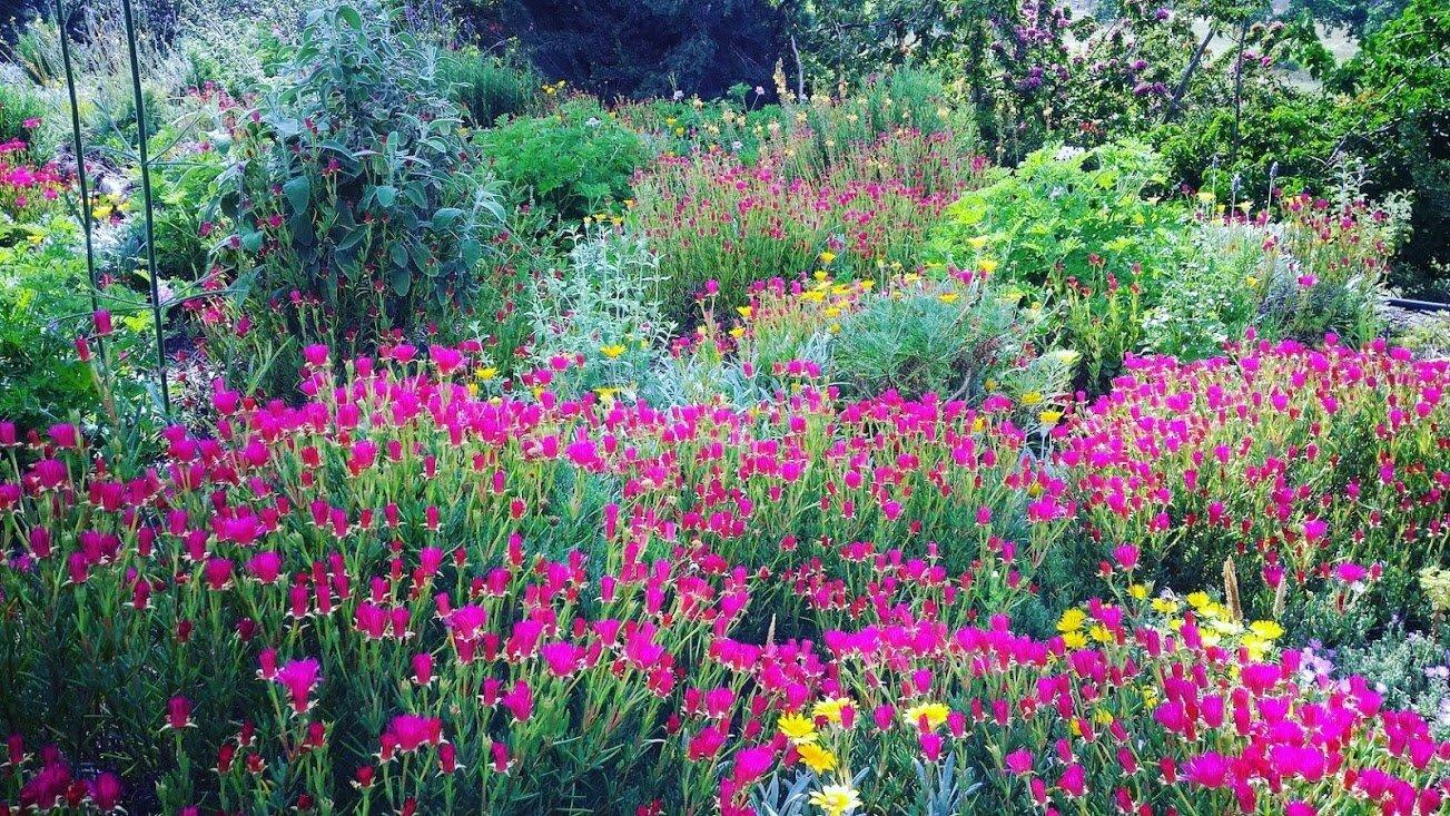 Benefits green roof vivacity