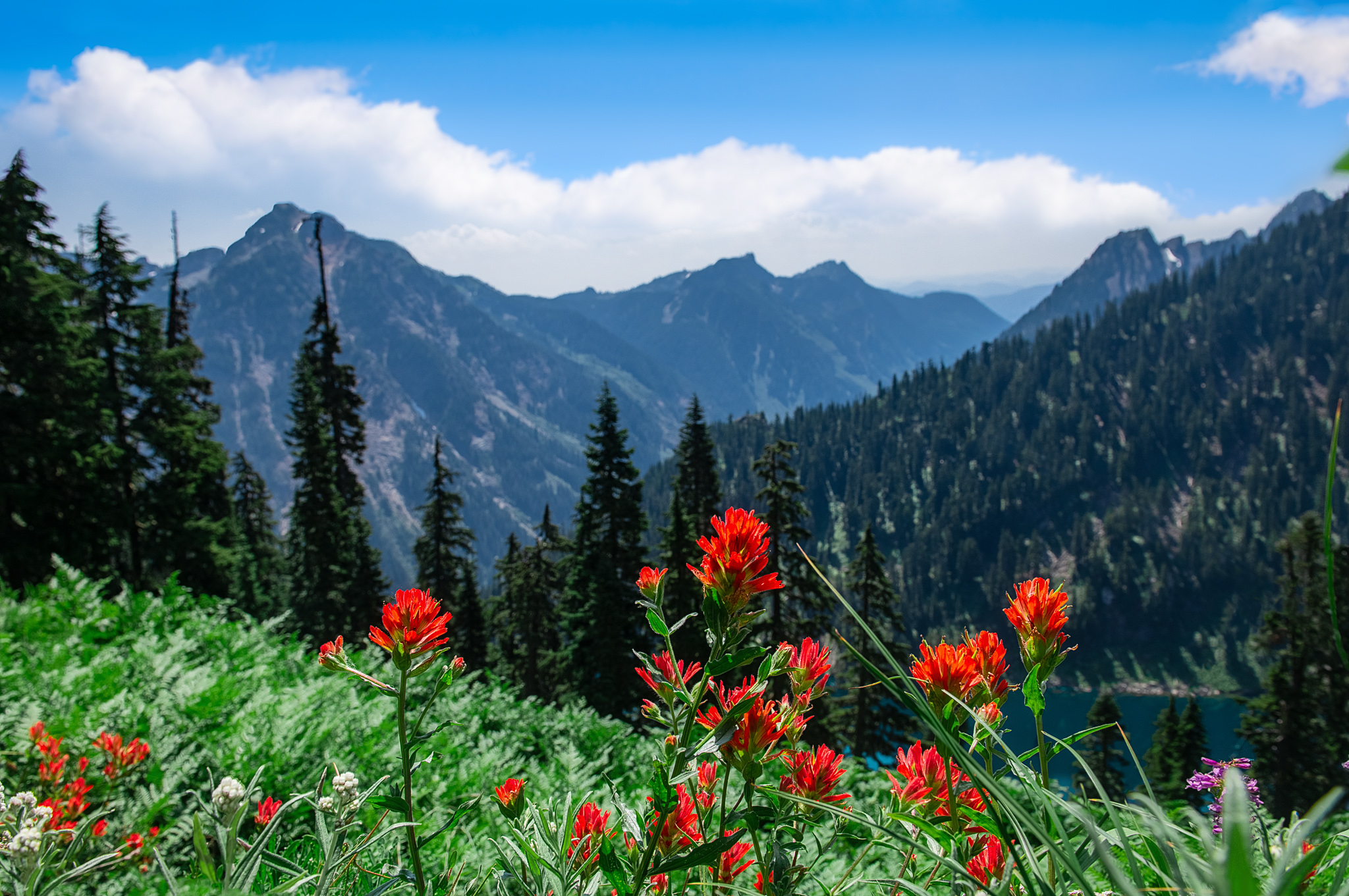 Indian Paintbrushes above Alaska Lake with Alta Mountain on left
