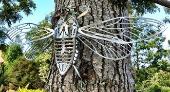 Cicada-3.JPG