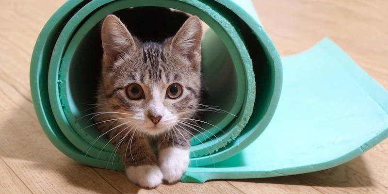 kitten-yoga-arlington.jpg