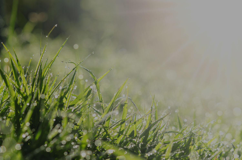 Lawn Fertilization - Keep Your Lawn Healthy