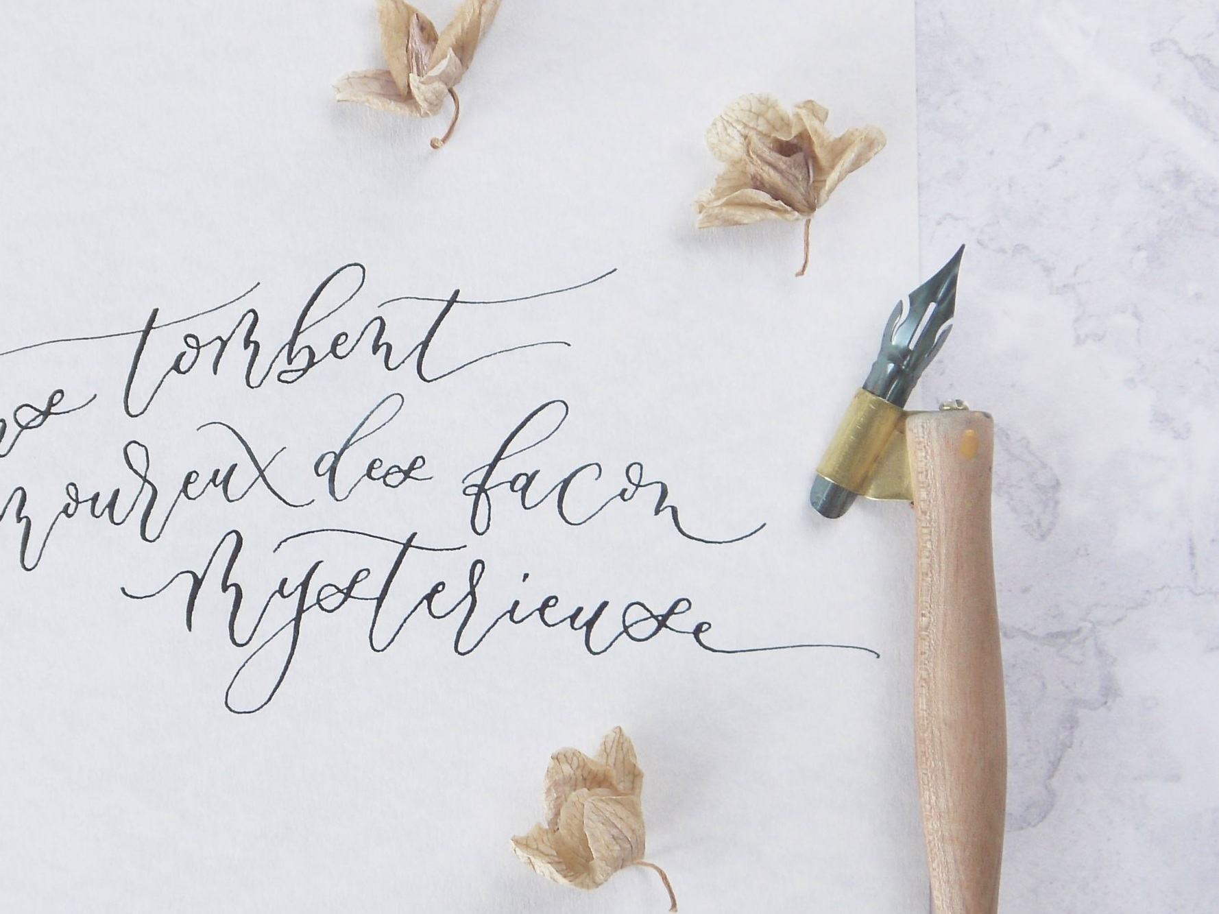 brause nibs for calligraphy wall art