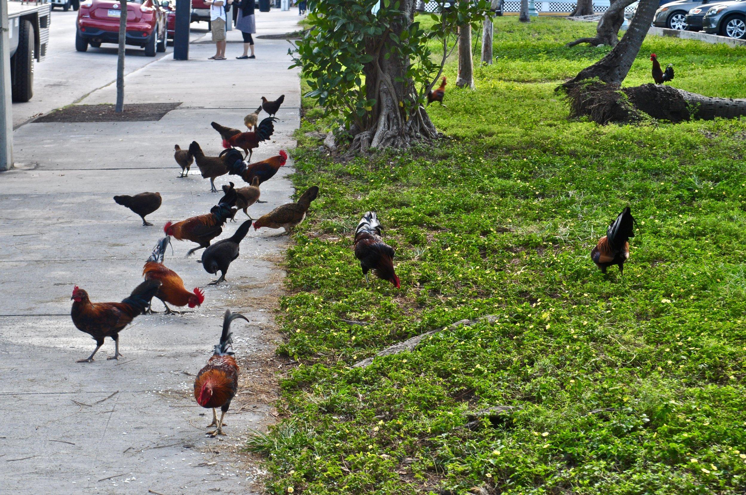 Self-Guided Walking Tour of Key West - A Happy Passport #keywest #florida #cruise #USA