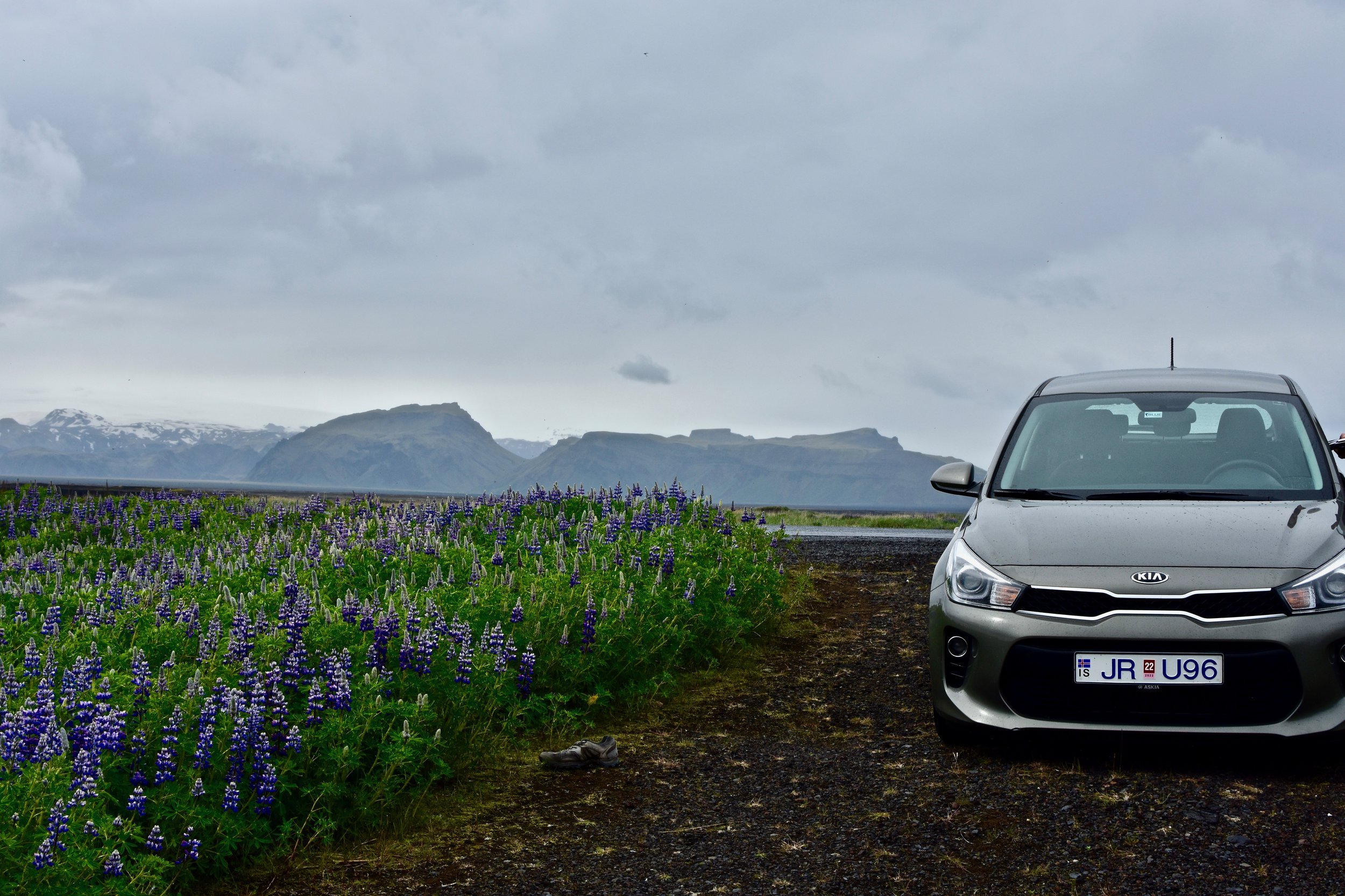Our car in a field of lupines outside of Vik