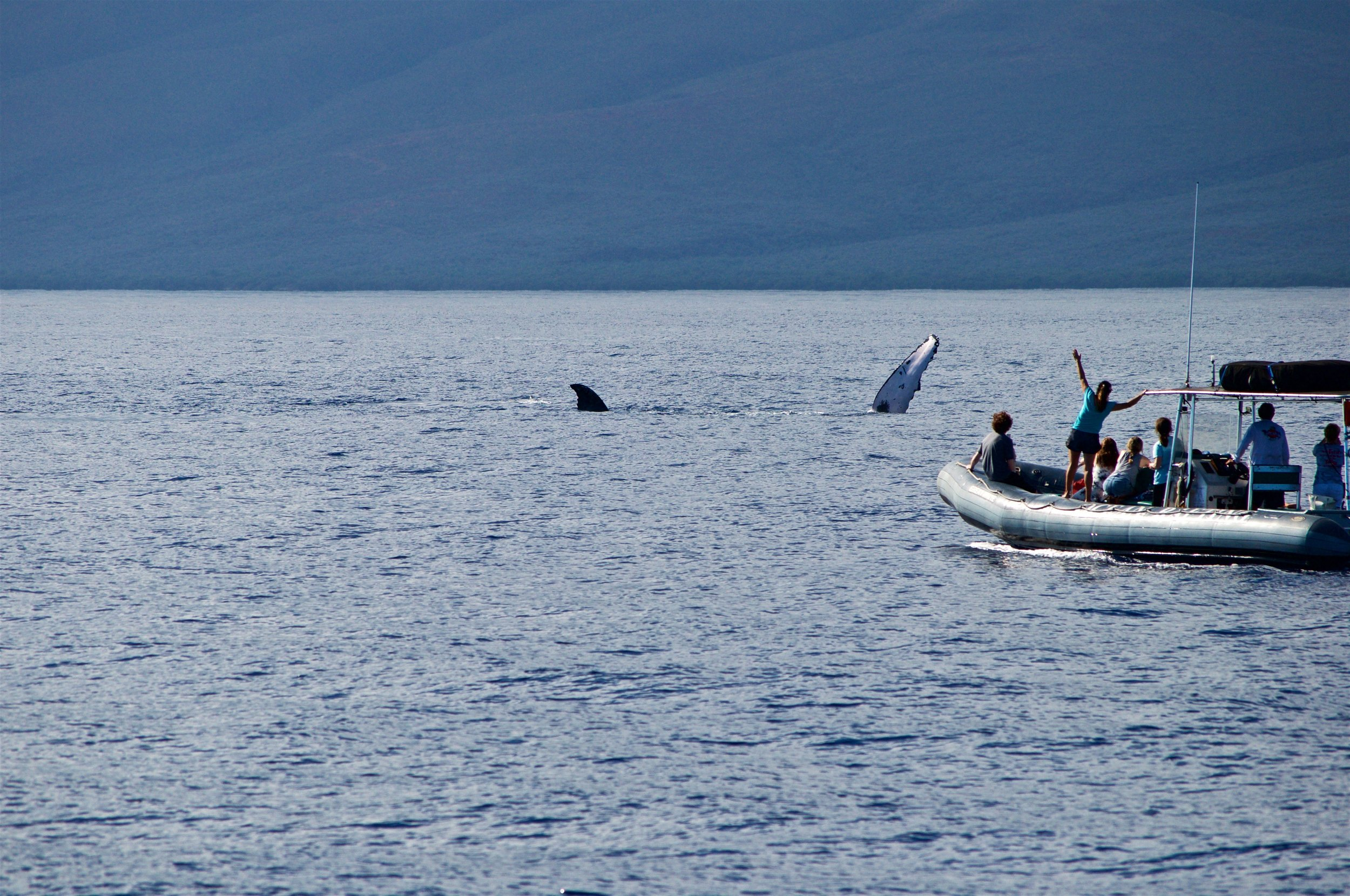Whale Watching Tour in Maui Hawaii