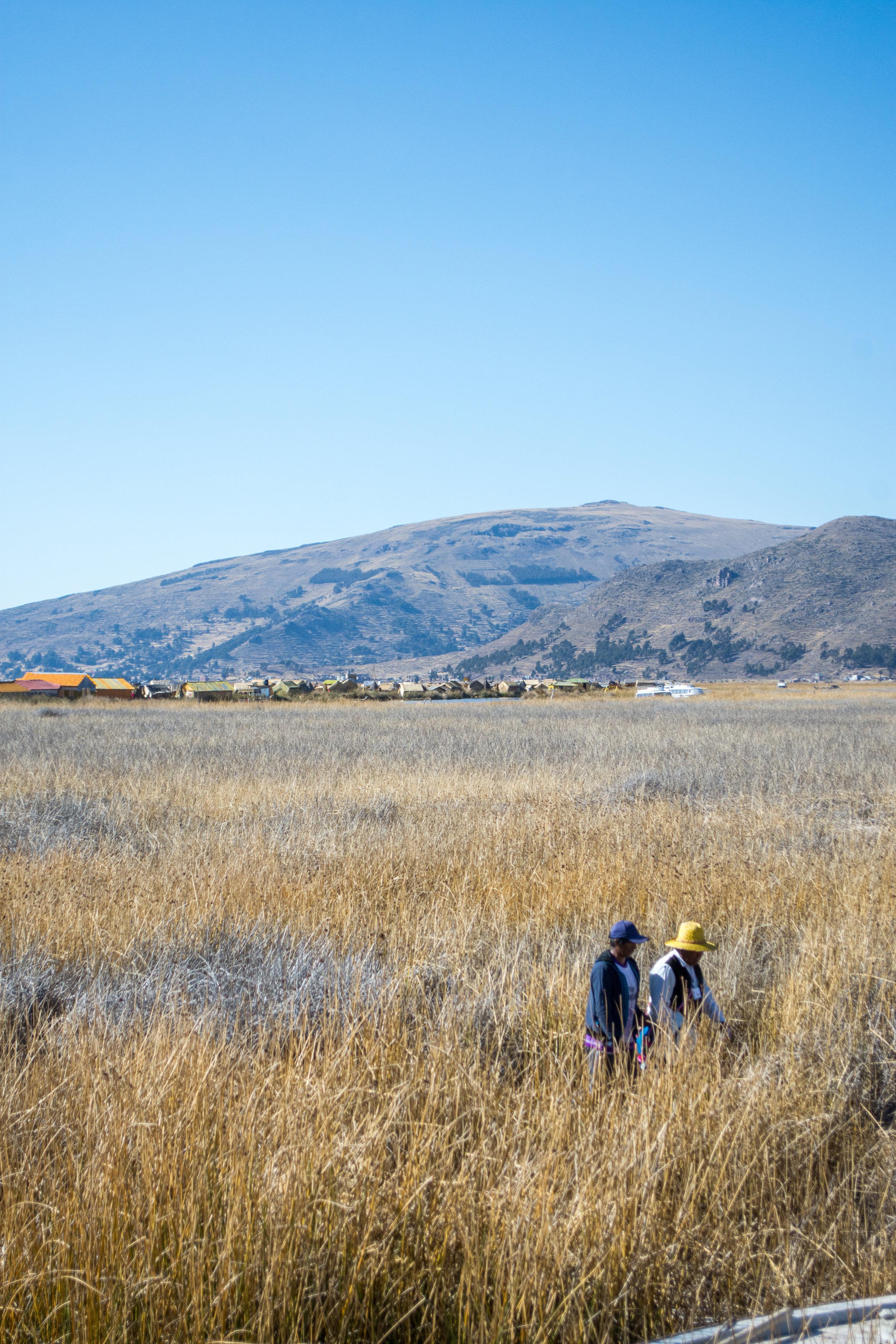 Uros People walking through the Totora Reeds