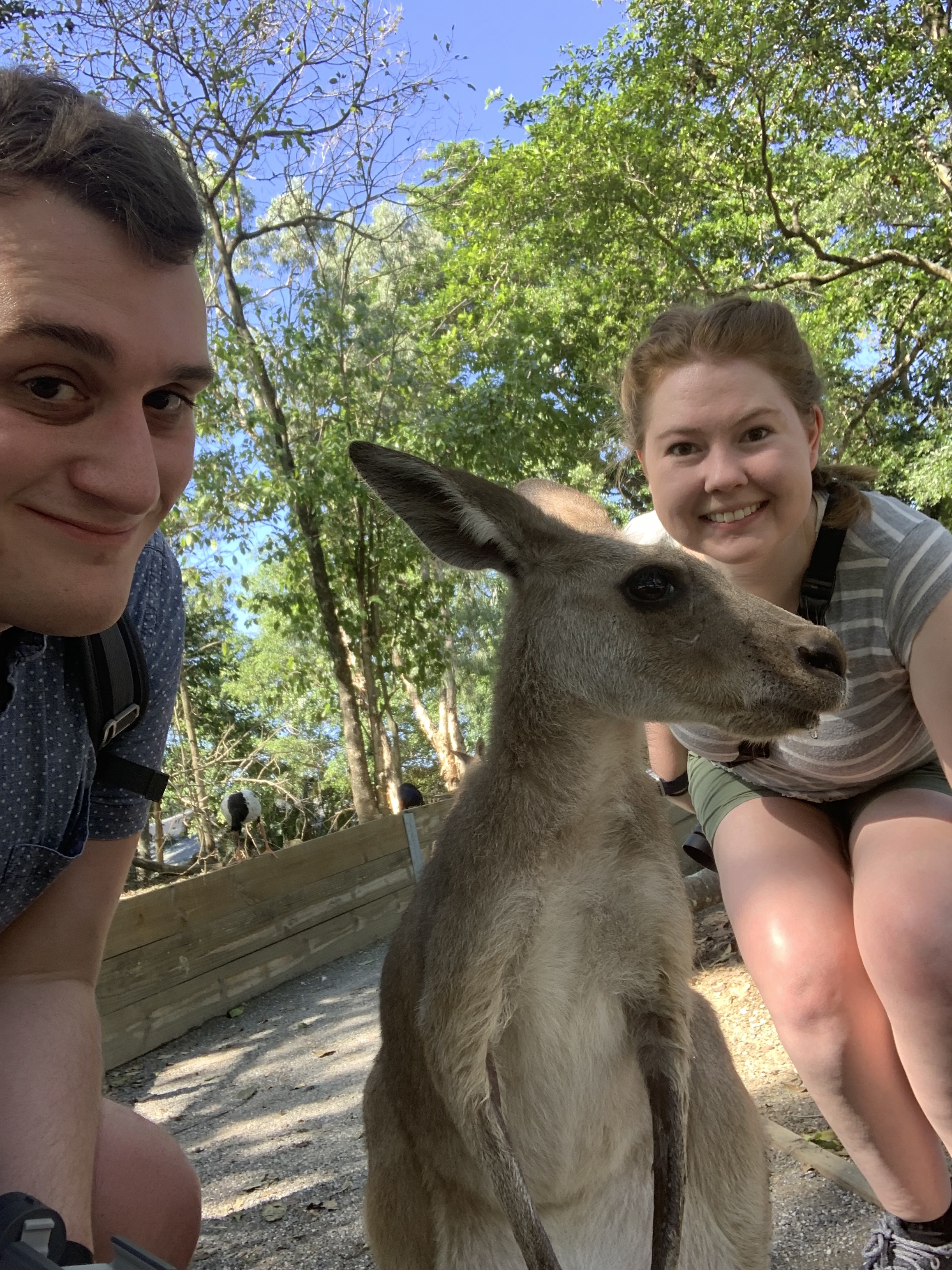 Kangaroo Selfie at The Wildlife Habitat in Port Douglas, Australia