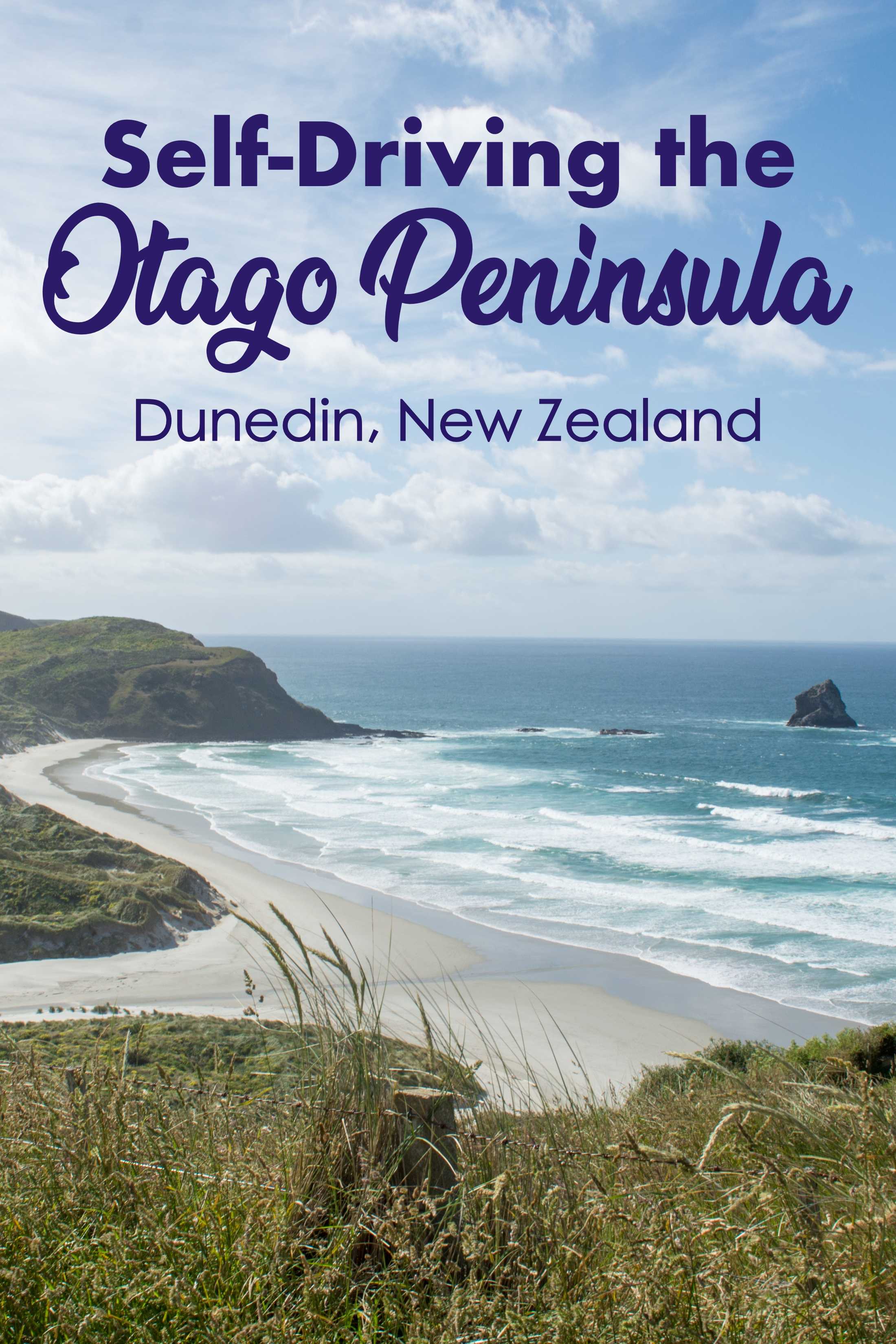 Self-Driving the Otago Peninsula from Dunedin, New Zealand.  DIY Cruise Shore Excursion for New Zealand.  Dramatic coastal views and rare wildlife spotting. #otago #dunedin #newzealand #cruise