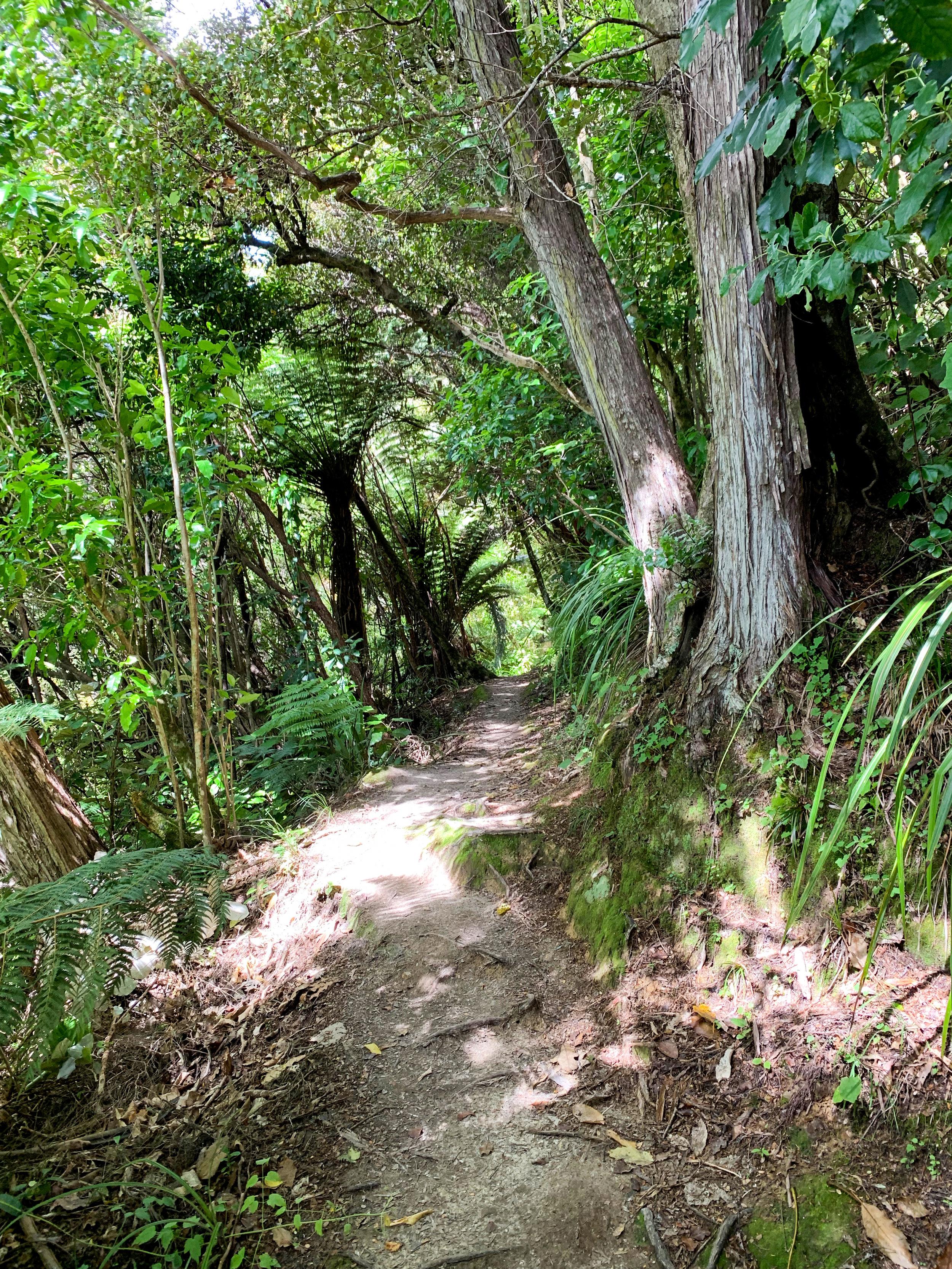 Tirohanga Track