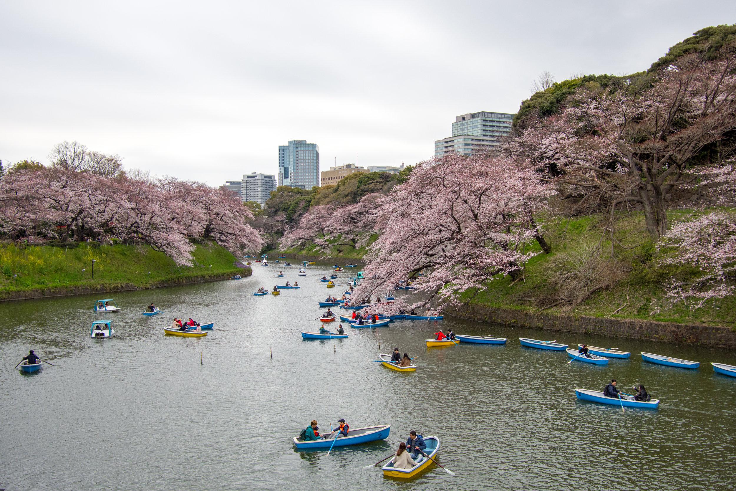 Chidorigafuchi Greenway in Tokyo