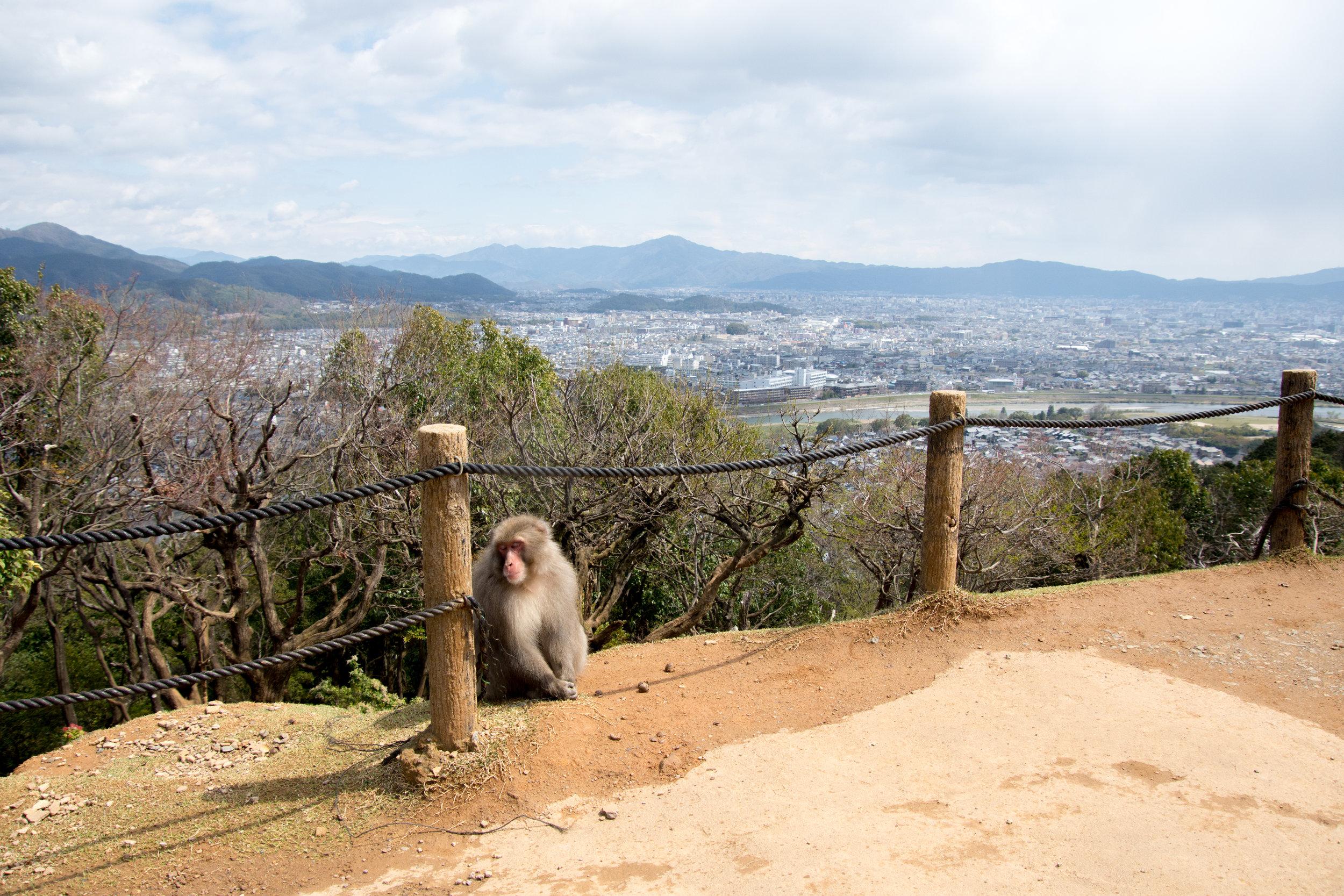Arashiyama Monkey Park Iwatayama in Kyoto