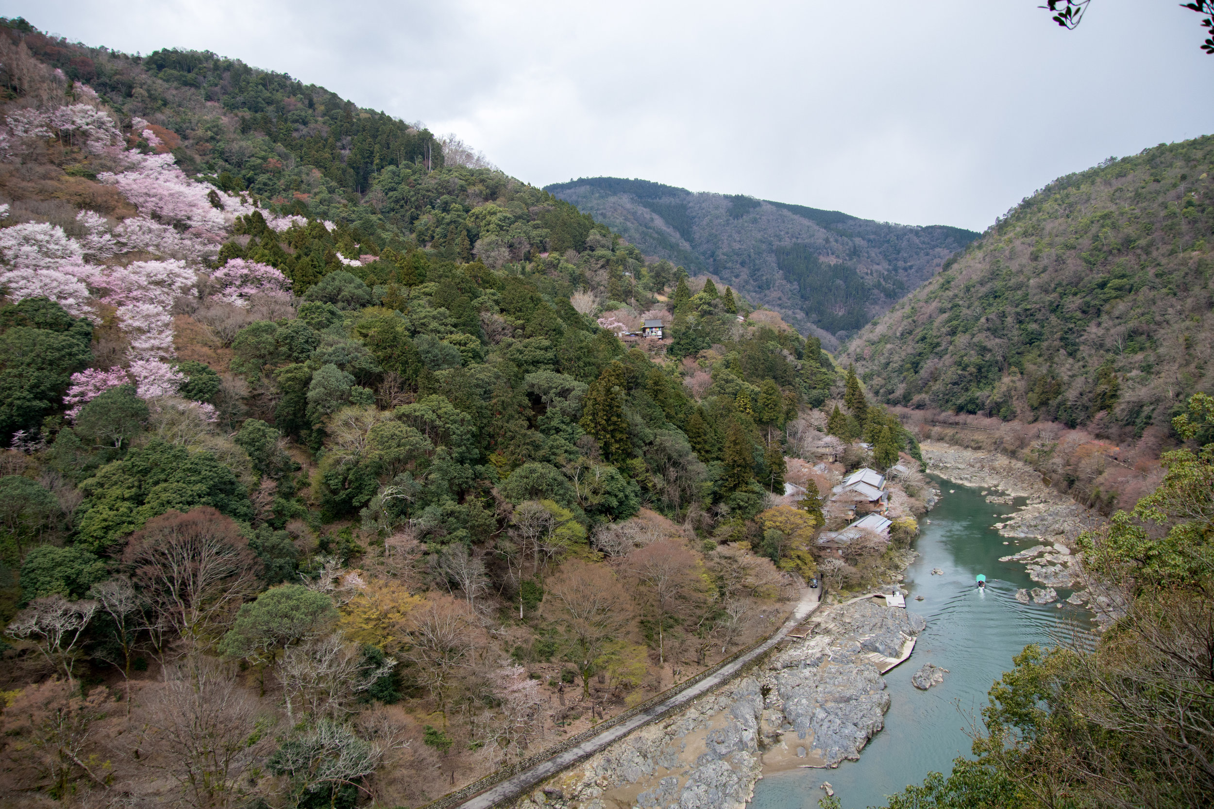 Katsura River in Arashiyama with blooming Cherry Blossoms
