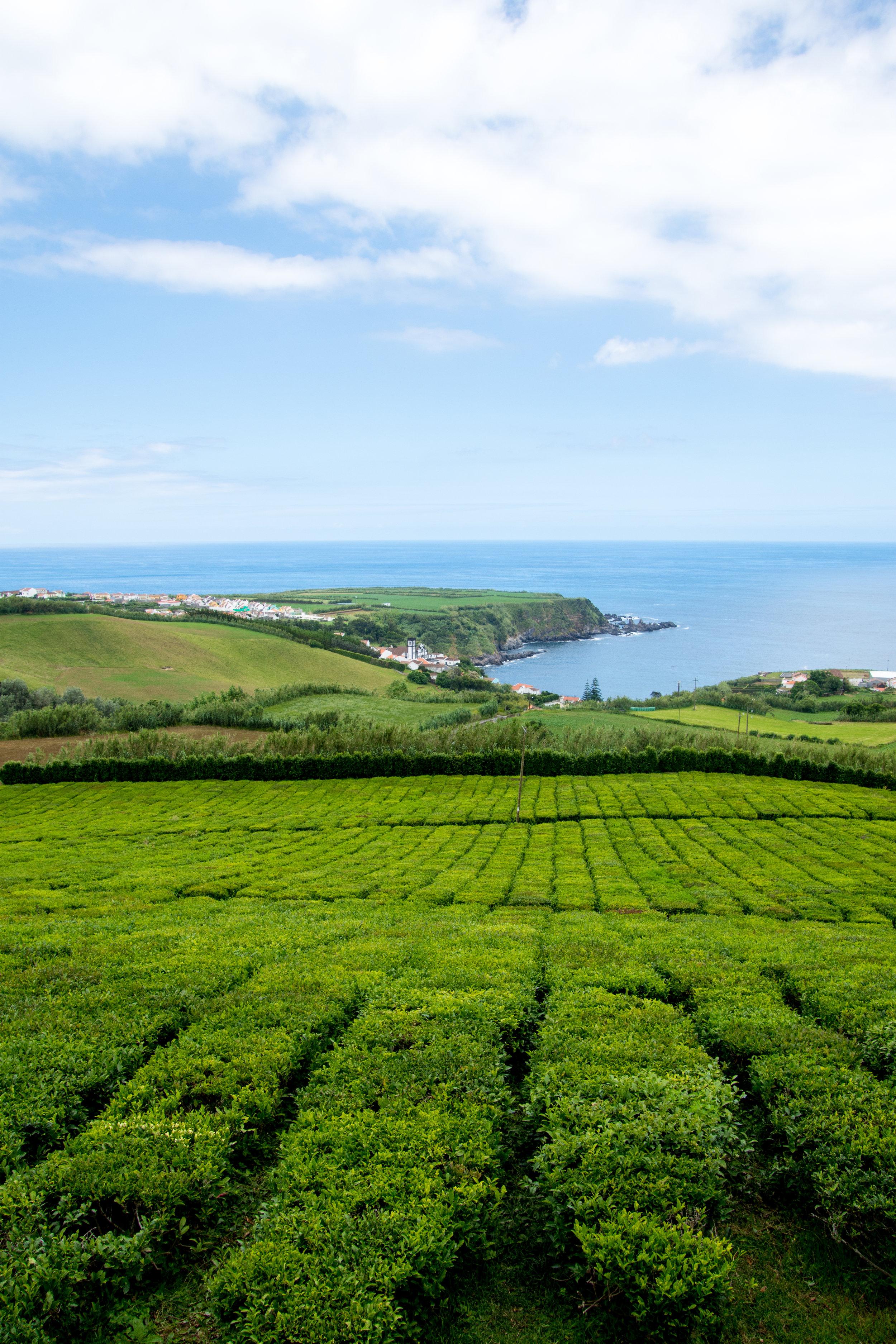 Porto Formoso Tea Plantation – São Miguel Island