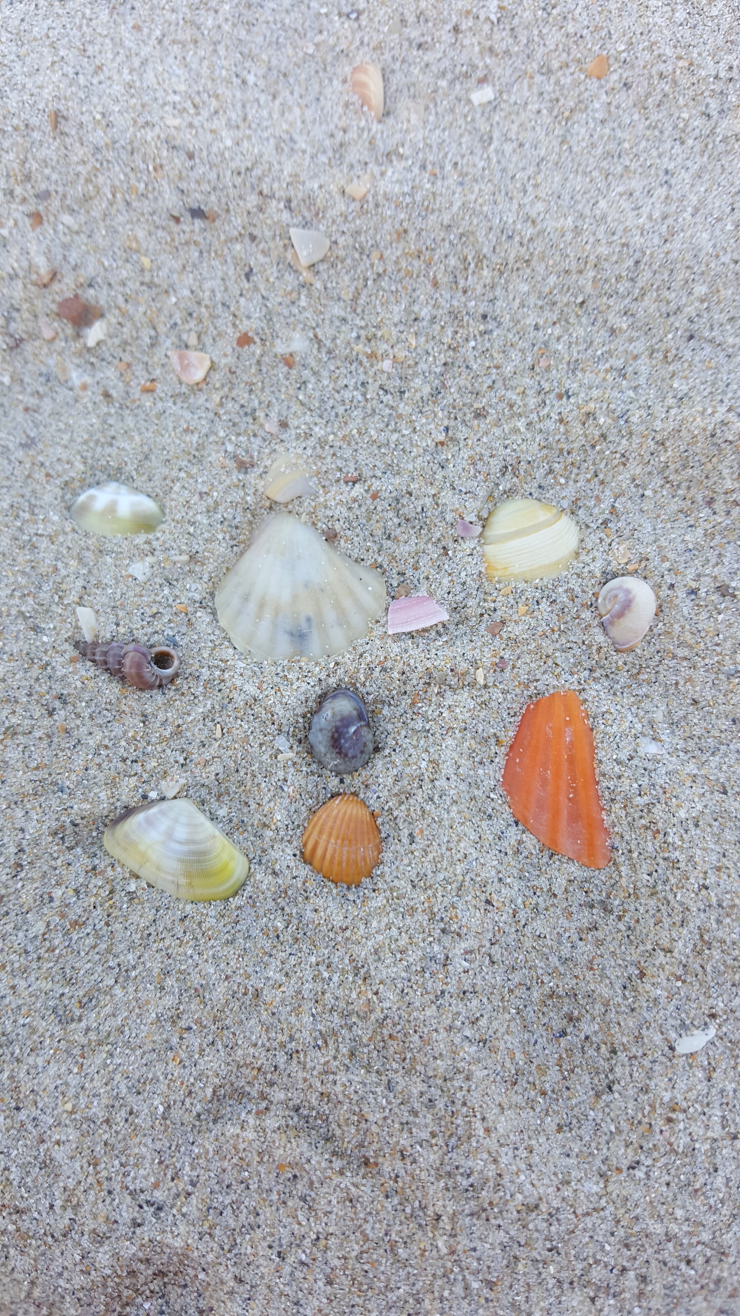 Target speech and language by doing various activities with seashells.