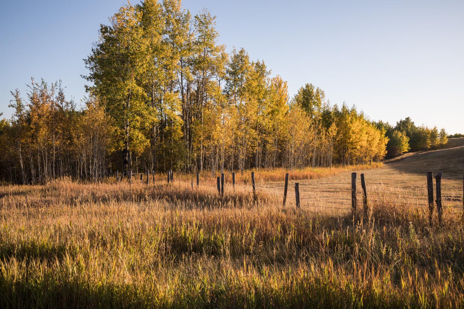 191 Moose Meadows LoRes-24.jpg