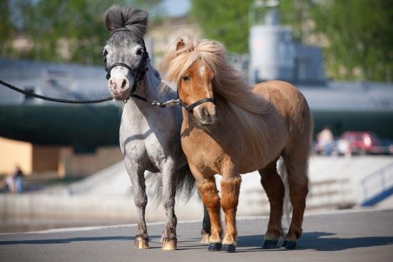 Mini-Mustang Petting Zoo - 4:00 PM-6:30 PM