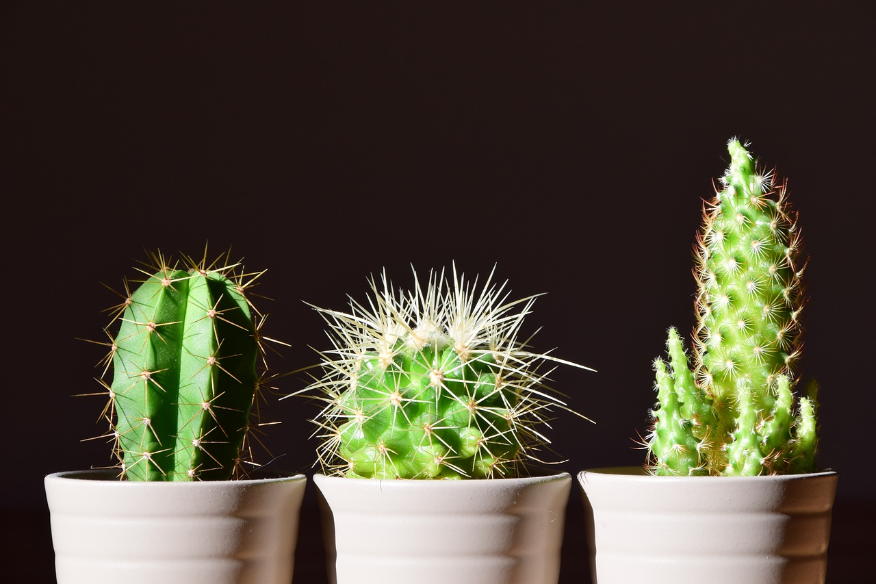 Cacti - Cactuses are great indoor plants for those who can't keep their plants alive for long. They don't require much attention and grow all on their own. Cacti also require minimal watering, so a weekly watering routine is enough for them.
