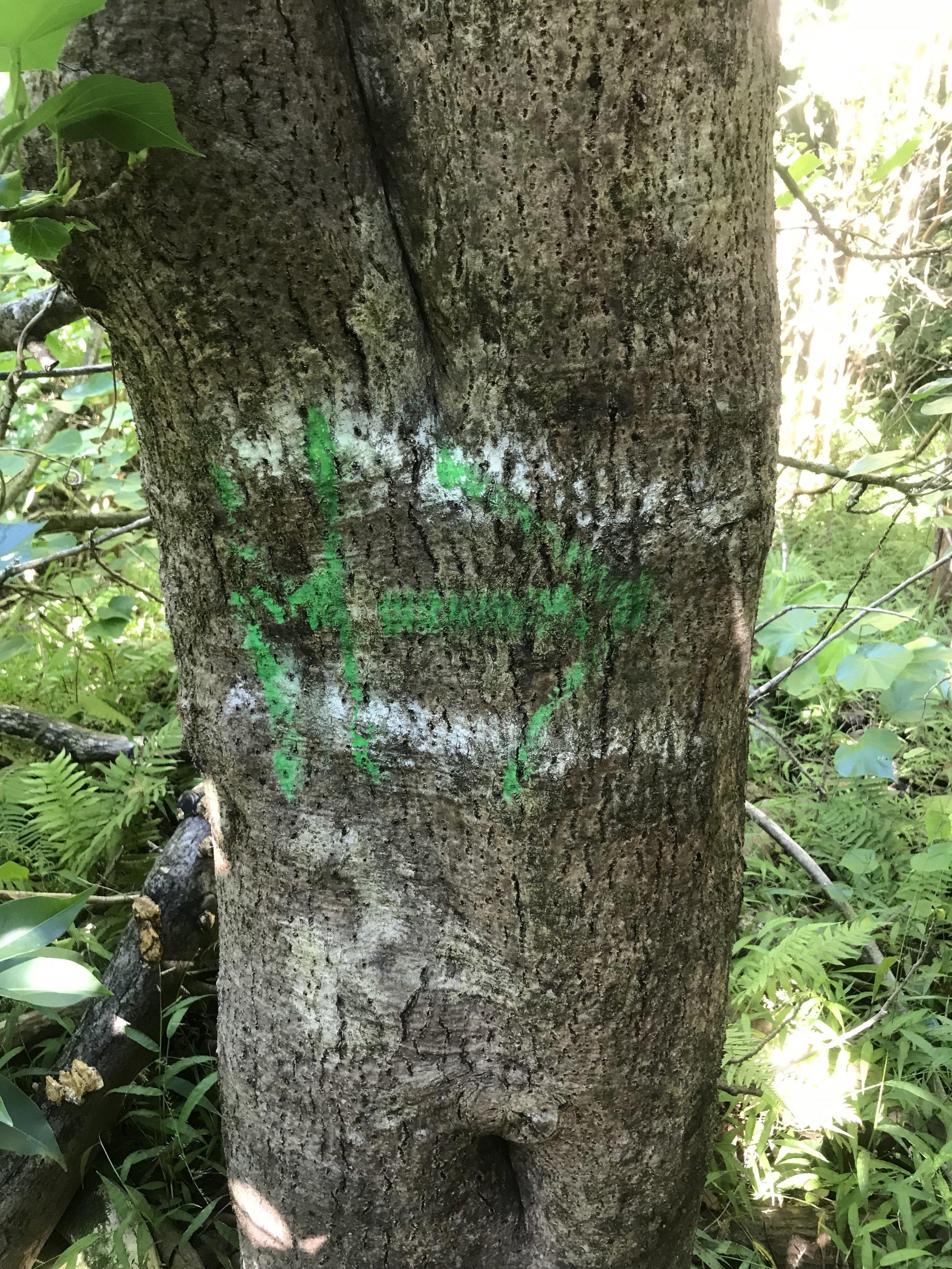 Moanalua-Valley-Trail-Marker.JPG