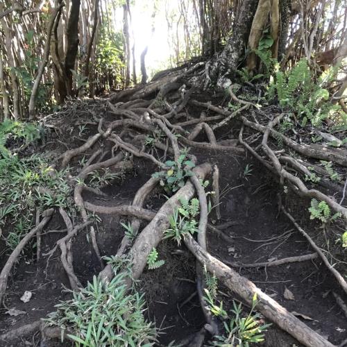 Stairway-to-heaven-hawaii-mud.JPG