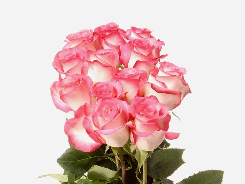 Dozen Rose Bqt 1