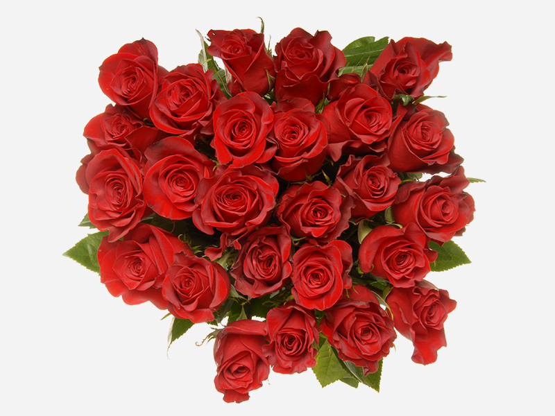 24 stem Roses 1
