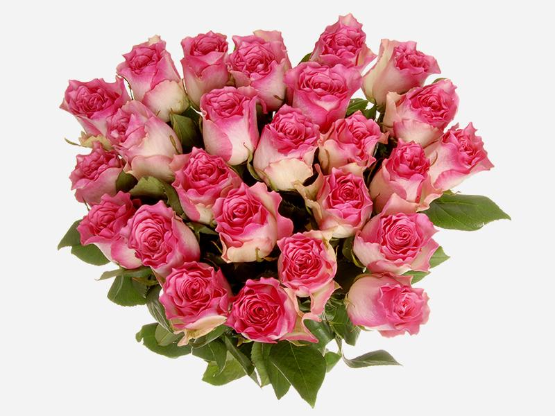 24 stem Roses 2