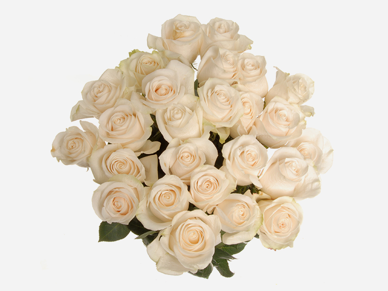 24 stem Roses 4