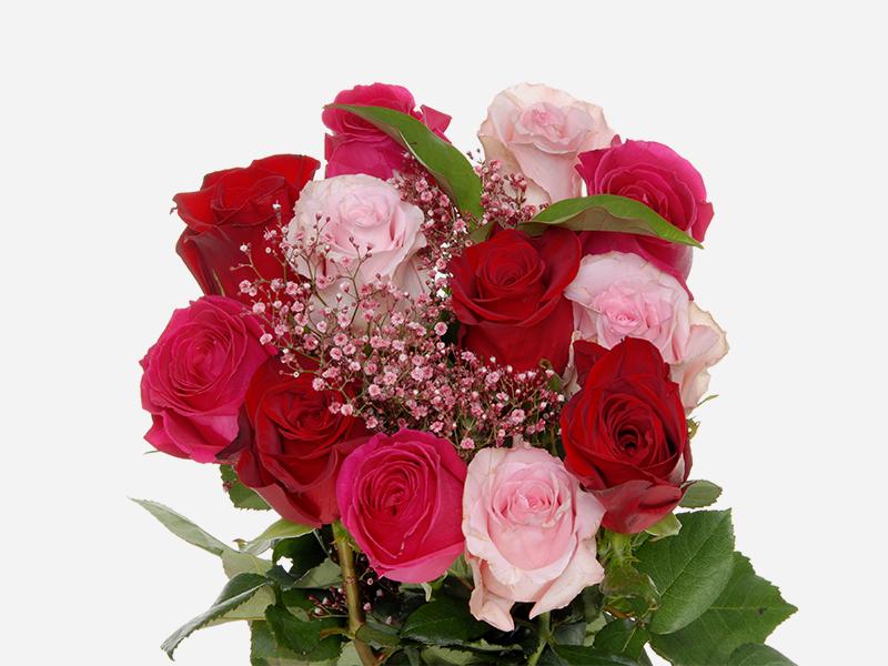 Rainbow Roses 2