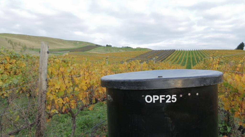 Vineyard+ferment.jpg