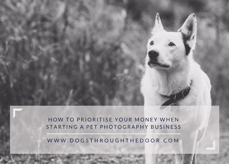 How to prioritise your money when starting a pet photography business