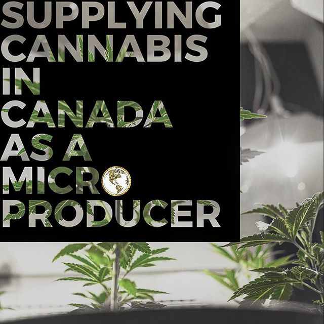 Since Health Canada has put out their news of wanting a facility built before applying for a commercial Cannabis licence - everyone is panicking. For what though? We've BEEN advocating to build your facility BEFORE Health Canada provides you a readiness letter in order to fast track your processing time. Health Canada has just made it easier and faster. The other issue individuals have is WHO are they going to be selling their product to? We've got that part covered as well. We even have a facility for you to conduct your activities in, with all of the equipment, so you don't have to break your head looking for it. We've done almost all of the legwork for your company - you just need to focus on growing FIRE! Obtain your Cannabis Licence approval with The Cannabis Scout by visiting the link in our BIO, receive a Purchase Agreement for your product with Cannabis Scout Collective @cannabisscoutcollective and 𝐉𝐎𝐈𝐍 𝐓𝐇𝐄 𝐋𝐄𝐀𝐆𝐔𝐄 🎽🏁 📣 ARE YOU LOOKING FOR A MEDICAL/FOOD GRADE FACILITY TO CONDUCT CANNABIS ACTIVITIES IN CANADA? The Cannabis Scout teamed up with @designbuildcanada to develop the World's most unique Cannabis park for Ganjapreneurs at @cannabis.haven🌱 LICENSE INCLUDED WITH THE PURCHASE OF A UNIT! Www.Cannabis-Haven.Com 🔊 📣 The Cannabis Scout & Partners are offering clients fully compliant documentation and compliant materials, to fast track their application of becoming a Standard Producer OR Micro Producer (CRAFT) along with national/international shipping and distribution platforms post approval. 📣 Fully integrate into a Standard Producer OR Micro Producer to become an authorized License Holder - we'll ensure the process of your application is a success. 📣 Www.TheCannabisScout.Ca  Tel:+1-365-336-7464 Tel:+1-519-808-4215 Email: Info@thecannabisscout.ca 📣 Keep out of reach of children. For use by adults 19 years of age & older. Please consume and grow RESPONSIBLY 📢 📣 #Canada #Canadian #Yyc #Yvr #TO #Ontario #BC #Vancouver #Montreal #MicroProducer #Toronto #Albert