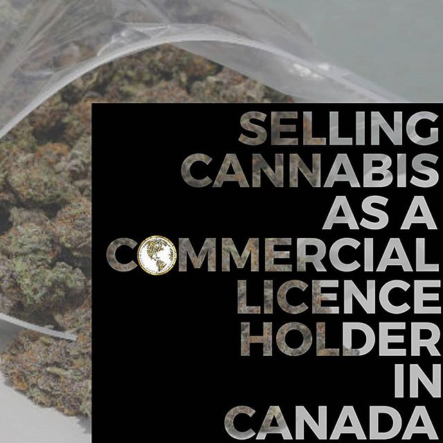 Let's discuss the benefits of selling Cannabis in Canada's regulated market. Right off the bat, 1. there is LESS competition. Especially, if you have a quality product that is held to a higher standard by the people and FOR the people. 2. The price per gram you'll receive in the legal market is considerably higher as well and remember - it's all BANKABLE and you could receive anywhere from $1,300/lb to $2,600+/lb WHOLESALE. Ya, that's right - Wholesale. 3. As a Commercial Licence Holder, you have the ability to be able to export your product on a global scale. That's just the tip of the bud or iceberg or however you want to call it! There's obvious benefits too which'll lead you to a stress free business and longevity... This is YOUR TIME. Obtain your Cannabis Licence approval with The Cannabis Scout by visiting the link in our BIO, receive a Purchase Agreement with Cannabis Scout Collective @cannabisscoutcollective and 𝐉𝐎𝐈𝐍 𝐓𝐇𝐄 𝐋𝐄𝐀𝐆𝐔𝐄 🎽🏁 📣 ARE YOU LOOKING FOR A MEDICAL/FOOD GRADE FACILITY TO CONDUCT CANNABIS ACTIVITIES IN CANADA? The Cannabis Scout teamed up with @designbuildcanada to develop the World's most unique Cannabis park for Ganjapreneurs at @cannabis.haven🌱 LICENSE INCLUDED WITH THE PURCHASE OF A UNIT! Www.Cannabis-Haven.Com 🔊 📣 The Cannabis Scout & Partners are offering clients fully compliant documentation and compliant materials, to fast track their application of becoming a Standard Producer OR Micro Producer (CRAFT) along with national/international shipping and distribution platforms post approval. 📣 Fully integrate into a Standard Producer OR Micro Producer to become an authorized License Holder - we'll ensure the process of your application is a success. 📣 Www.TheCannabisScout.Ca  Tel:+1-365-336-7464 Tel:+1-519-808-4215 Email: Info@thecannabisscout.ca 📣 Keep out of reach of children. For use by adults 19 years of age & older. Please consume and grow RESPONSIBLY 📢 📣 #Canada #Canadian #Yyc #Yvr #TO #Ontario #BC #Vancouver #Montreal #MicroProducer #Toronto #Alberta #MaryJane #LoveYourPlants #Weedmaps #LiftCanada #RollingLoud #Manitoba #CanadianGrown #ACMPR #MMAR #LiftCOExpo #Cookiessf #Entrepreneur #Calgary