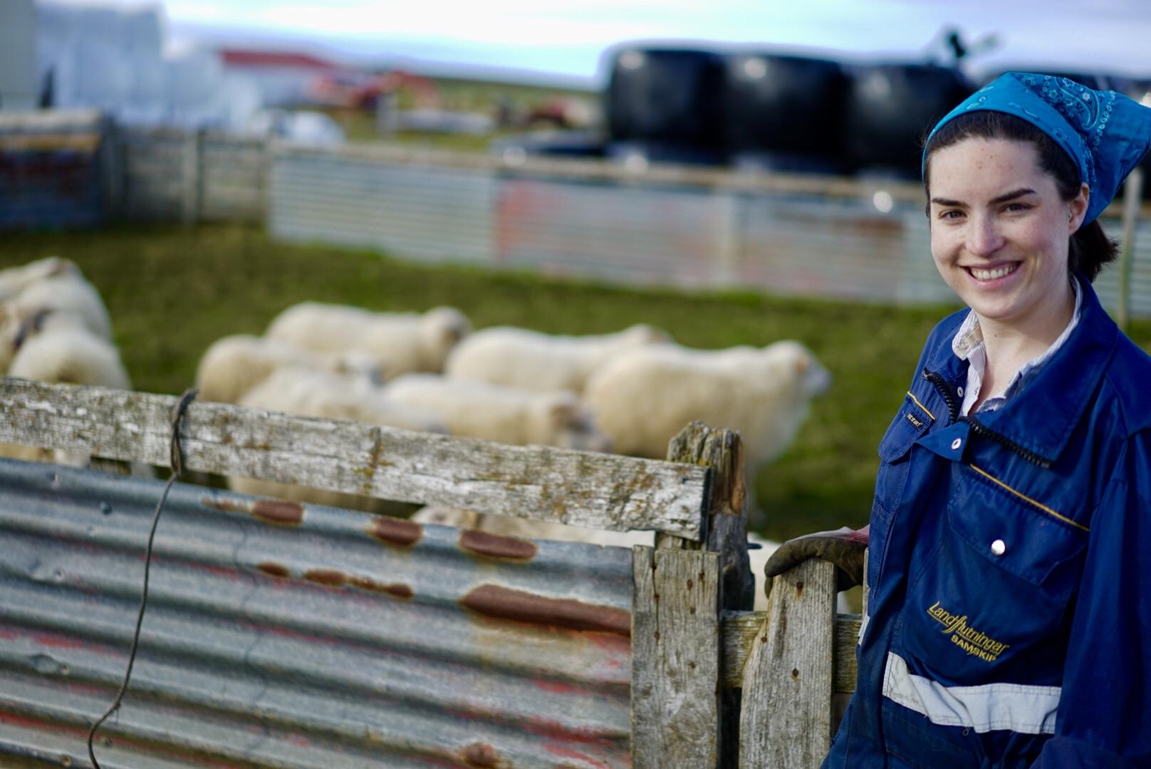 sheep-me3.jpg